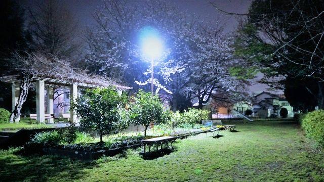 夜の公園 ベンチ