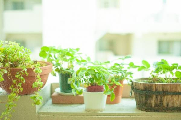 風水に観葉植物を使って劇的に恋愛運アップさせる8の術