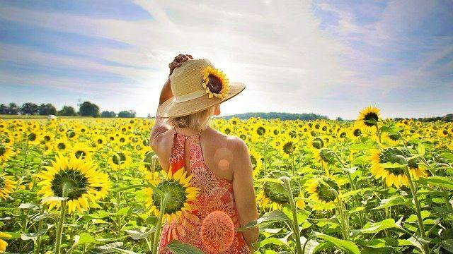 女性の後姿 麦わら帽子 ひまわり畑 自然 太陽 青空 希望